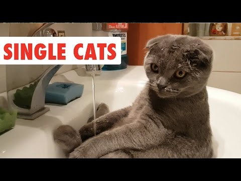 Single Cats   Funny Cat Video Compilation 2017