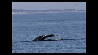 Whales! Winter Wildlife Watching Rudee Flipper VA Beach