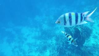 Gambar cover Для сна Релакс Рыбки, Коралловый Риф, Красное Море. ASMR Музыка Медитация - Подводный мир Египет.