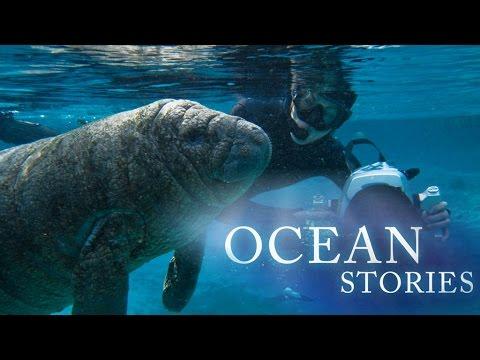 Ocean Stories 2 - Manatees and Molas