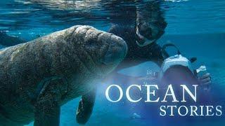 Ocean Stories 2 - Manatees and Molas thumbnail