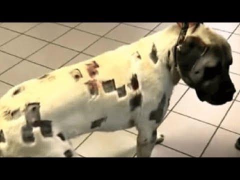 Хозяйка увидела раны собаки и сразу же вызвала полицию, никто такого не ожидал