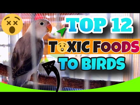 TOP 12 Foods That Are TOXIC To Lovebirds - WORST Foods To Feed Your Birds
