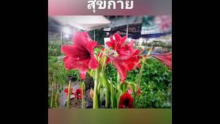 ภาพดอกไม้สวย-สวัสดีปีใหม่