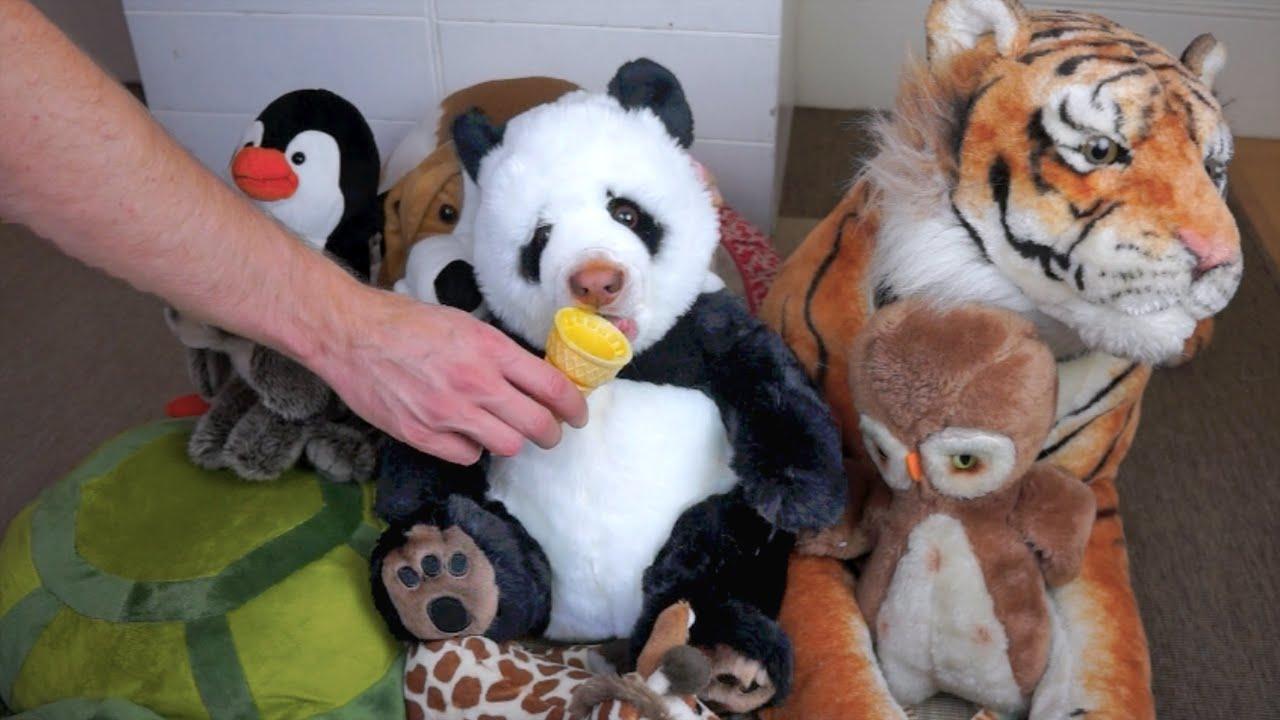 panda eats ice cream cone funny dog maymo youtube