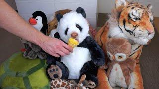 Panda Eats Ice Cream Cone: Funny Dog Maymo
