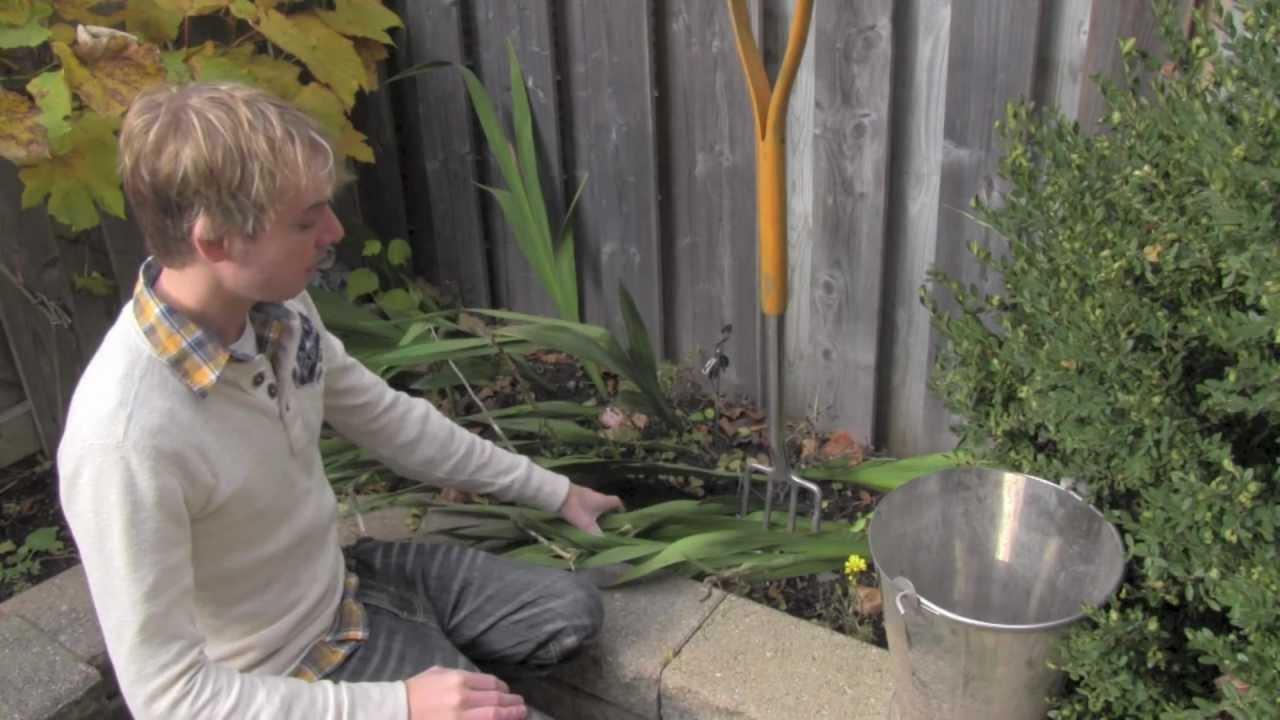 Fall Gladiolus Care