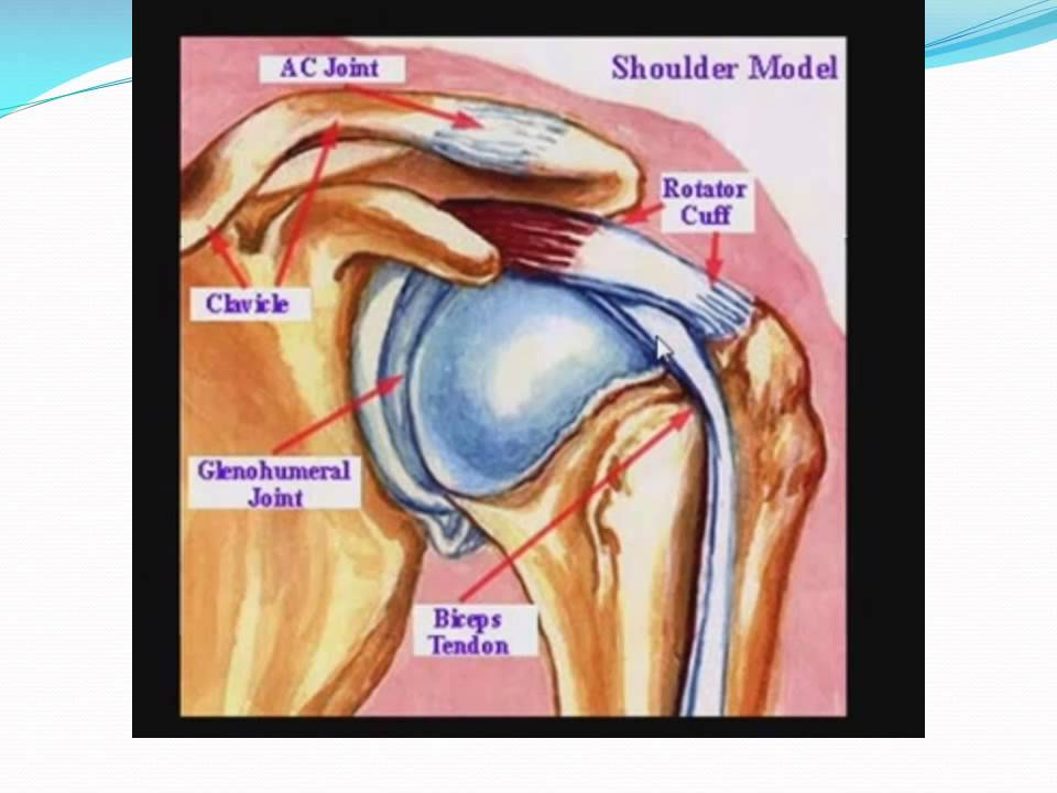 CT MRI SHOULDER ANATOMY Dr/AHMED EISAWY - YouTube