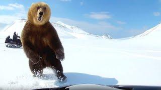 10 schockierende Videos von Begegnungen zwischen Mensch und Tier