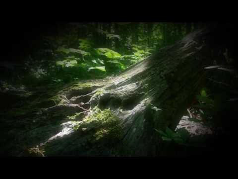 4K Nature Scene - Hobbit_Home - Free Stock Footage