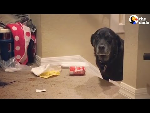 Dogs Who Are Guilty AF