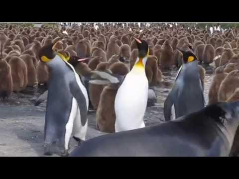 Видео -