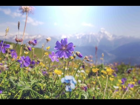 """Peaceful Music, Relaxing Music, Instrumental Music, """"The Golden Days of Summer"""" by Tim Janis"""