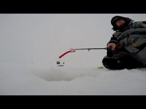 Зимняя рыбалка на Волге. Ловля судака и берша на тюльку в Камском ...