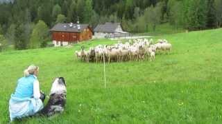 Video cane da pastore download MP3, 3GP, MP4, WEBM, AVI, FLV Agustus 2018