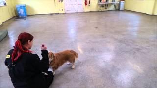 Dogs Trust Salisbury - Callum
