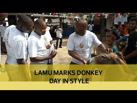 Lamu marks donkey day in style