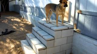 My Back Yard Block Stairs Finished