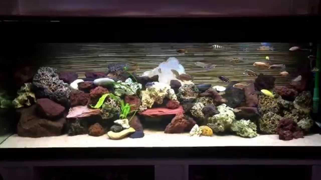 Decoration Aquarium Lac Malawi