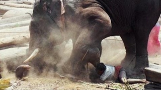 怒っている象が人間を殺して、オブジェクトを壊す! 怒っている象が人間...
