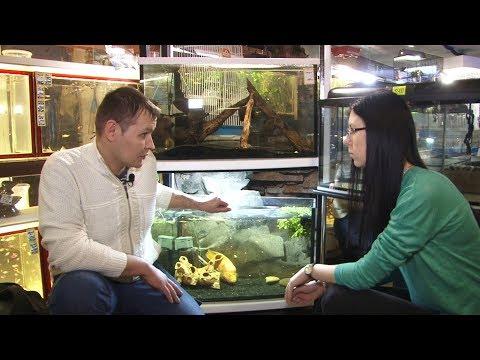 Аквариумные рыбки и черепахи | Хвостатые истории