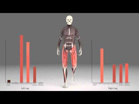 Leg Muscles During Walking