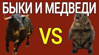 Быки и медведи в криптовалютном мире - Криптословарь тренды