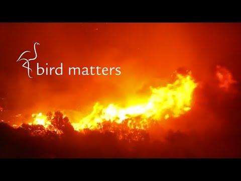 Fire in the Fynbos: Bird Matters