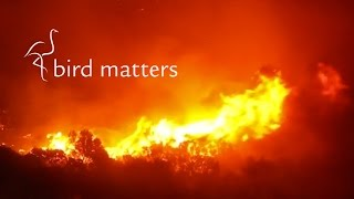 Fire in the Fynbos: Bird Matters
