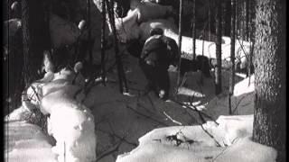 Охота на медведя №4