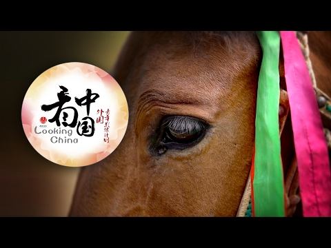 Looking China: The Horse Land