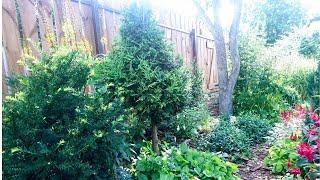 Сад в июле. Обзор посадок под забором. Прикрыть забор