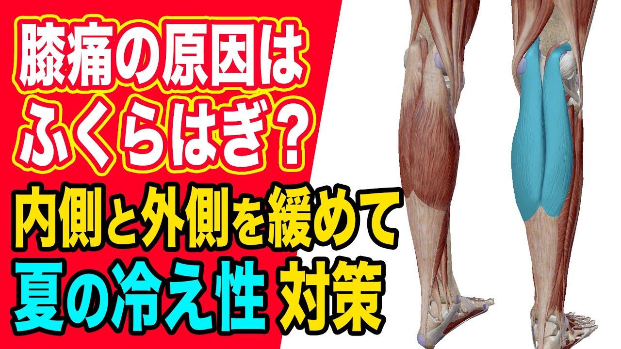 【膝痛・肉離れ】筋肉ニュートラル「腓腹筋(ふくらはぎ)」90秒セルフ整体