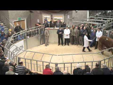 Perth Bull Sales - October 2010