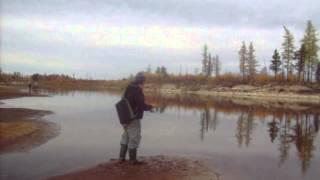 Рыбалка на Ямале.ПРИЕЗЖАЙТЕ!(видео, добавленное с мобильного телефона., 2013-03-02T16:36:52.000Z)