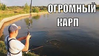 видео Толстолобик белый
