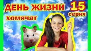 КАК ПРИРУЧИТЬ ХОМЯЧКА   15 ДЕНЬ ЖИЗНИ ХОМЯЧАТ   CHILD OF THE HAMSTER   bébé hamster