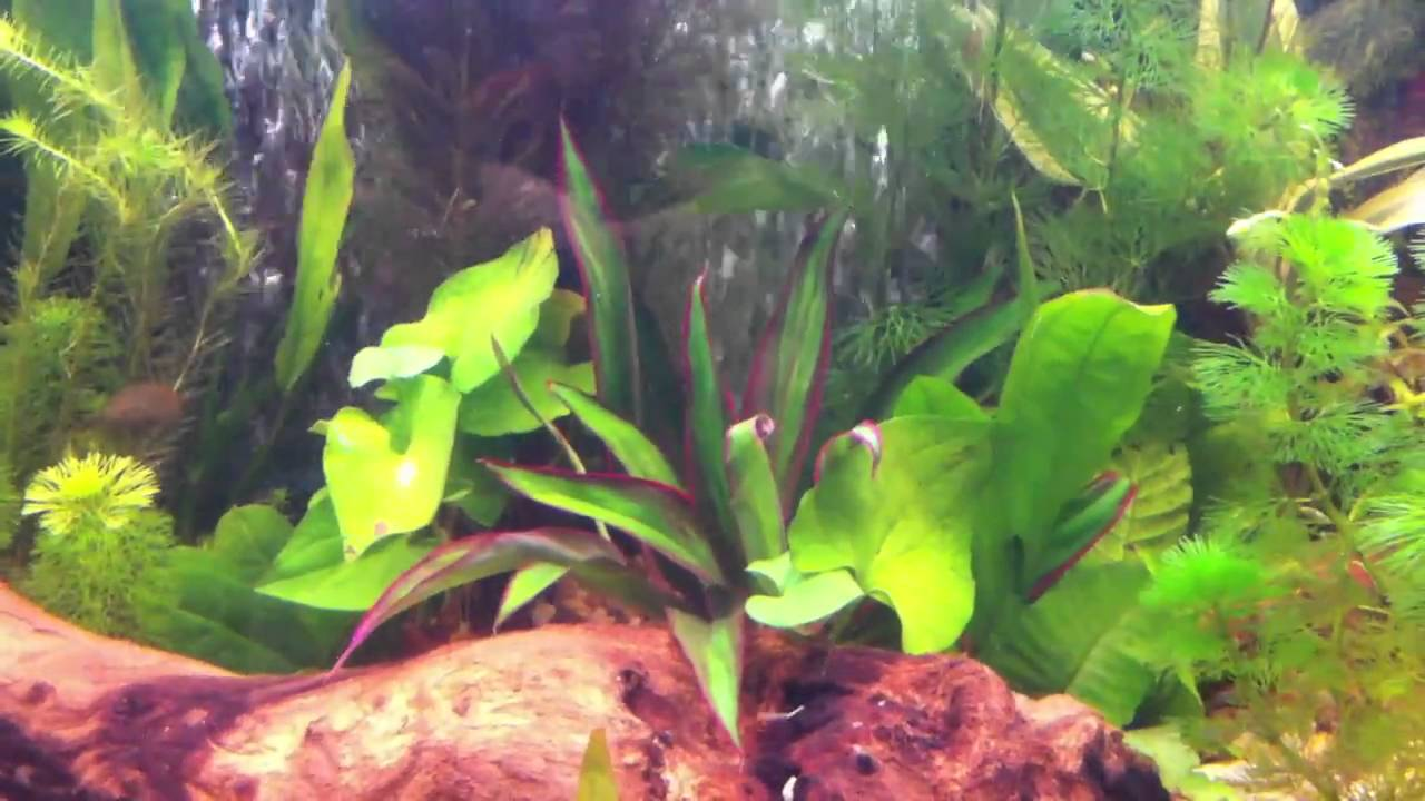 fluval vicenza 260 limited edition planted day 10 youtube. Black Bedroom Furniture Sets. Home Design Ideas