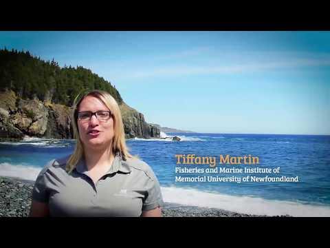 Marine Institute Ocean Net Clean Up 2017