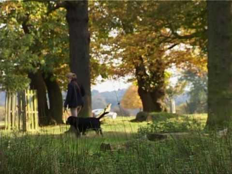Richmond Deer Park - London UK