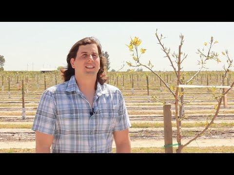 Growing Pistachios, Almonds with Precision Irrigation Management