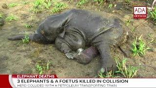 Three elephants killed by train in Habarana (English)