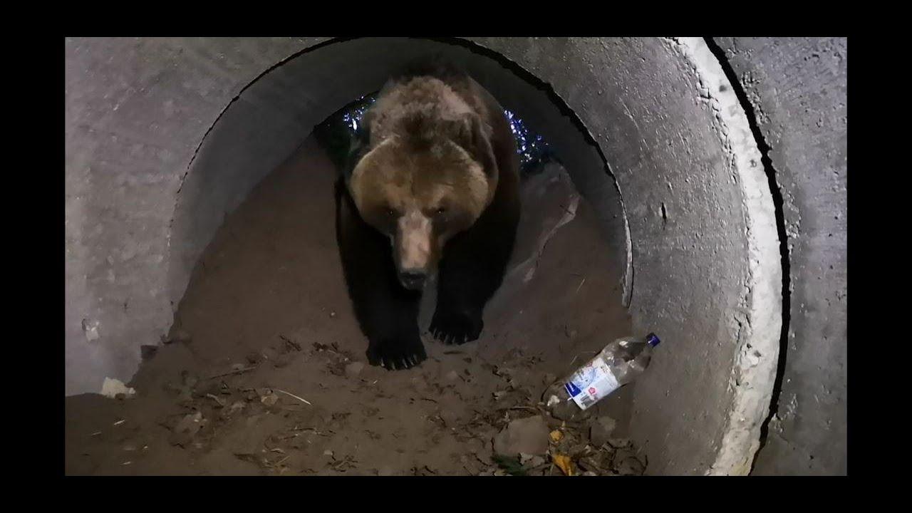 И снова пытаюсь заманить медведя в берлогу спать