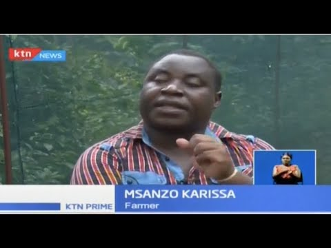 Butterfly Farming: How a Kilifi farmer is reaping Sh40,000 a month in the mangrove forest