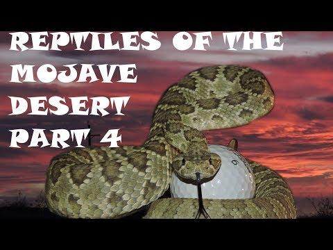 Reptiles of the Mojave Desert Part 4, Herping
