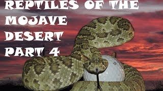Reptiles of the Mojave Desert Part 4, Herping