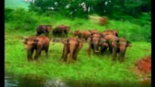 Kerala Tourism, Tour to Kerala, Kerala Tour