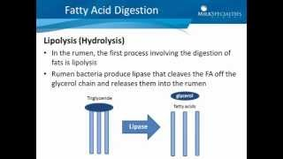 Palmitic & Stearic Acids: Digestion
