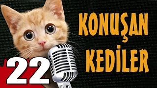 Konuşan Kediler 22 - En Komik Kedi Videoları