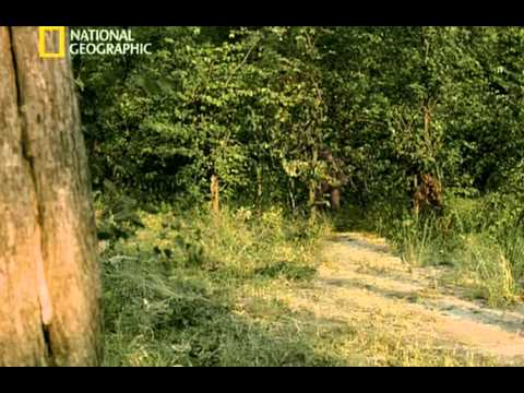 National Geographic - Ape Man : Search for the First Human (2005)